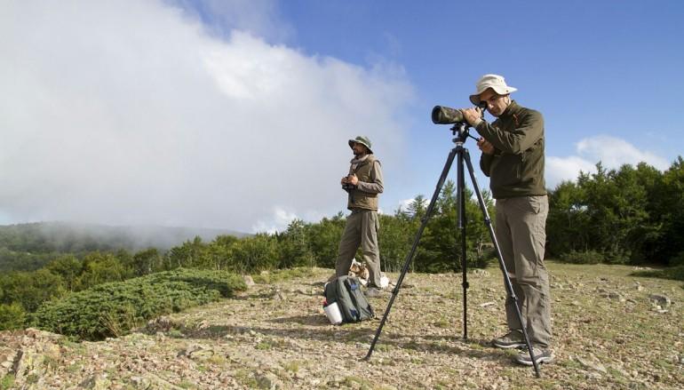 Parco Aspromonte: aggiornamenti in tempo reale su monitoraggio Avifauna migratoria