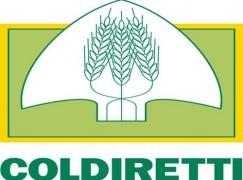 Vibo Valentia, proposte Coldiretti su emergenza cinghiali