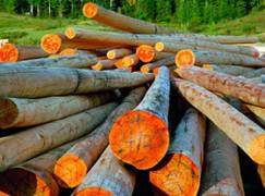 Serra San Bruno, domani convegno bio-economia forestale