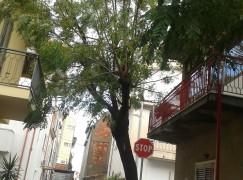 """Lazzaro, Crea: """"tagliato albero secolare"""""""