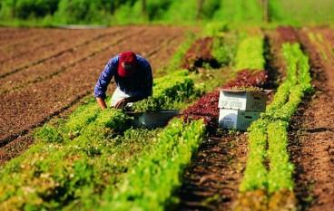 Approvato il prezziario agricolo dalla Giunta Regionale