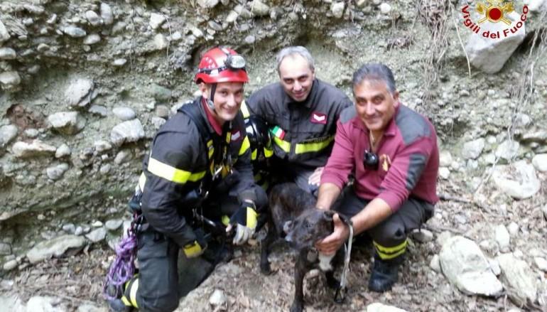 Simeri Crichi, Vigili del Fuoco salvano cane in pericolo