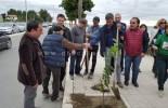 Video: Giornata dell'albero a Melito di Porto Salvo