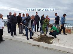 Melito di Porto Salvo, Giornata dell'albero: le foto