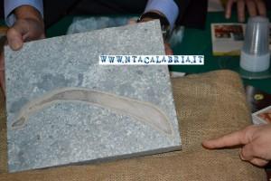 fossile sirenio pietra lazzaro