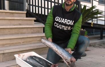 Amendolara, sequestrati 40 kg di novellame di pesce spada