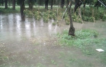 Maltempo, danni alle colture agricole tra Nocera Terinese e San Pietro Lametino