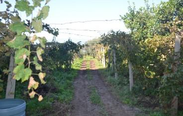 """Reggio, a Sambatello la """"Settimana del nostro Vino"""""""