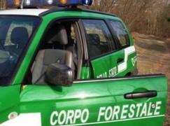 Reggio Calabria, persona denunciata per maltrattamento animali