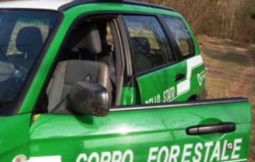 Corpo Forestale di Reggio Calabria: i risultati operativi 2015