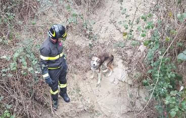 Montalto Uffugo, salvato cane intrappolato nella vegetazione