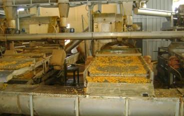 Rosarno, sequestrata azienda di trasformazione agrumaria