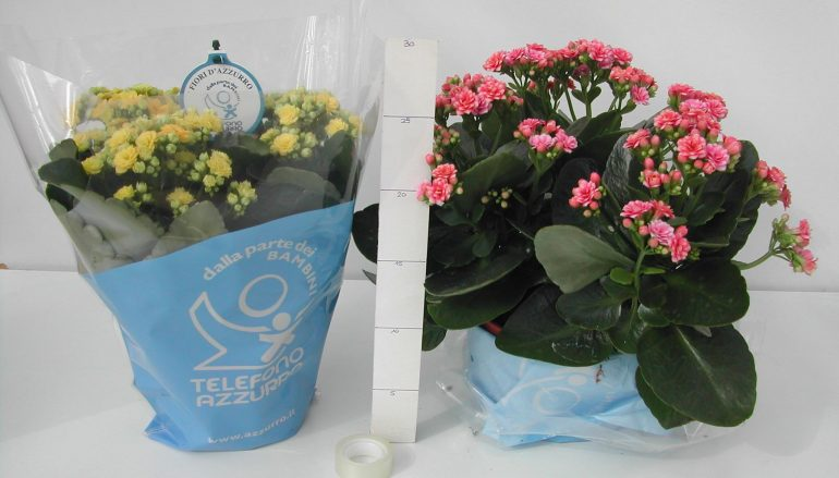 Soverato, Fiori d'Azzurro: scegli un fiore contro il bullismo