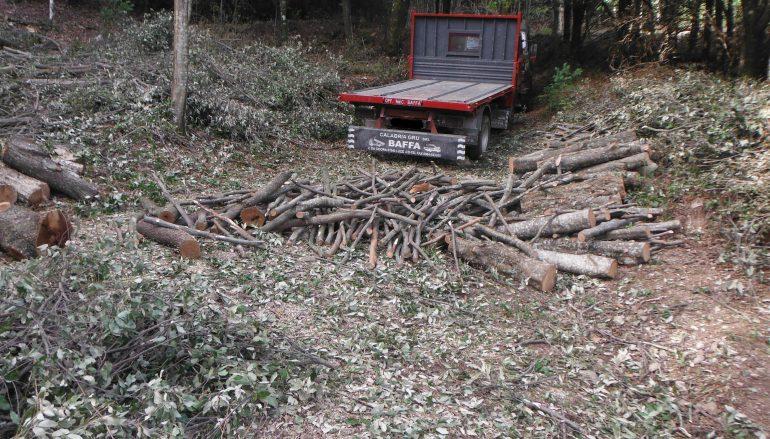 Stilo, trafugavano legname proveniente da bosco: 2 arresti