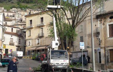 Morano, abbattuto l'olmo di Piazza Maddalena