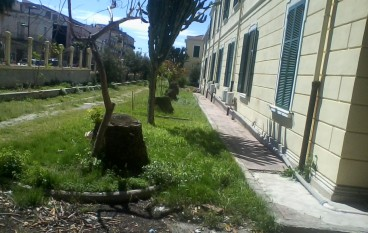 La morte degli alberi e il degrado dell'Ospedale di Melito