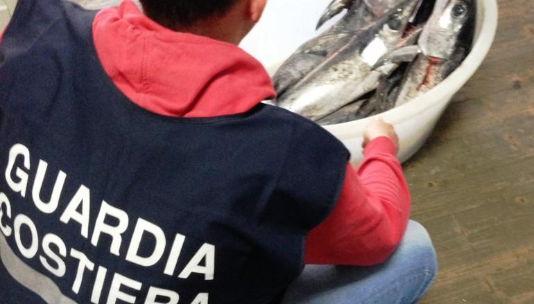 Roseto Capo Spulico, sequestrati 30 kg di pesce spada