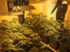 Reggio Calabria, coltivavano marijuana in casa: arrestati