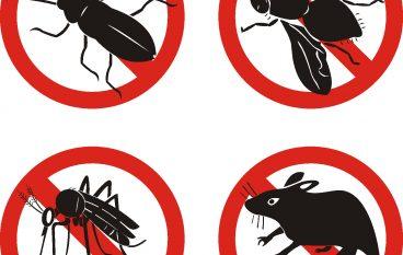 San Lorenzo, al via operazioni di disinfestazione da insetti