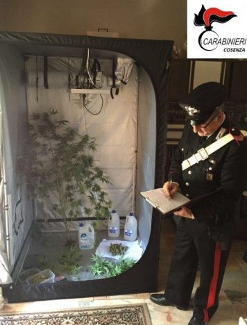 Mendicino, coltivava cannabis in casa: arrestato