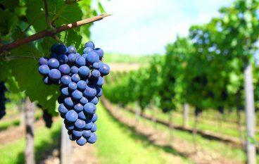 Palizzi, il paese dell'area grecanica del buon vino