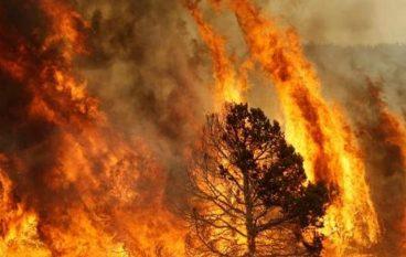 """Allarme dei Vigili del Fuoco: """"La Calabria brucia, la Regione prende tempo"""""""