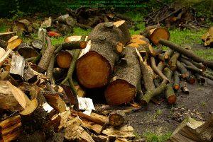 furto legna