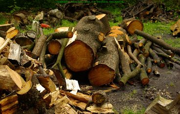 Reggio Calabria, furto di legna: sei arresti
