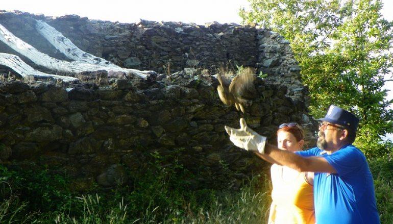 A Montalto Uffugo due rapaci tornano a volare dopo le cure