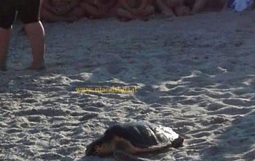 Roccella Jonica, tartaruga marina fa ritorno a mare (VIDEO)