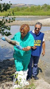 moria pesci bisignano
