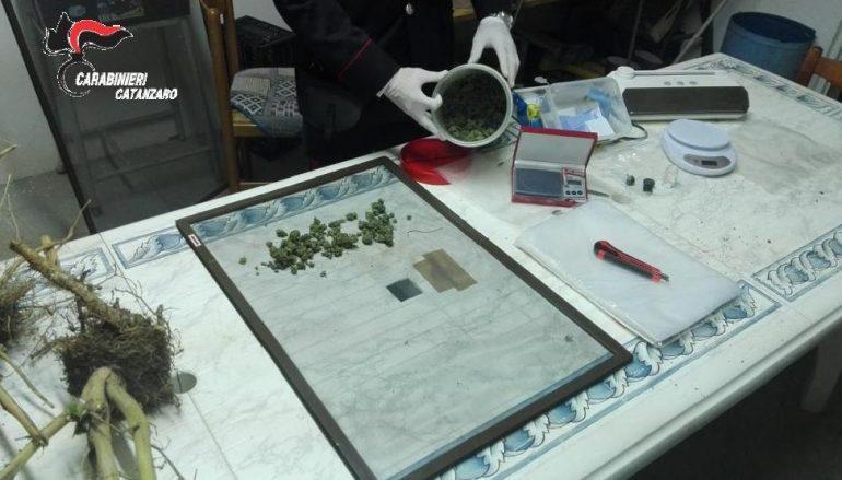 Lamezia Terme, droga dal produttore al consumatore: un arresto