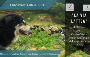 Bova, il Parco d'Aspromonte consegna ai pastori cani da guardiania