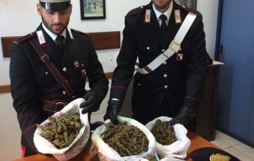 Rosarno, aveva marijuana in casa: arrestato
