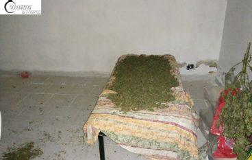 Guardavalle, sequestrati 5 Kg di marijuana in un essiccatoio