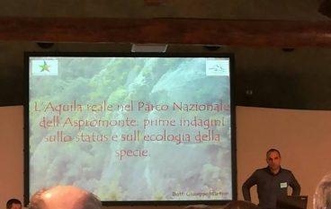 Monitoraggio Aquila Reale: il Parco Aspromonte presenta i risultati