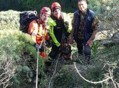 Staiti, recuperato dai Vigili del fuoco un segugio da caccia