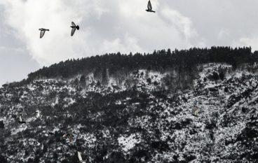 Roccaforte del Greco, nuova ordinanza su chiusura scuole