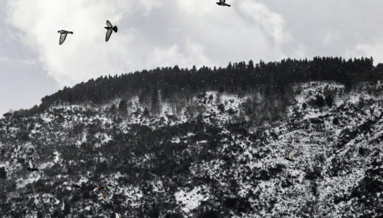 Le foto della neve a Roccaforte del Greco
