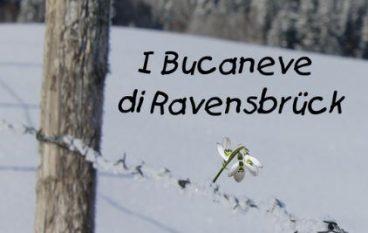 """""""I Bucaneve di Ravensbrück"""" di Anna Laura Cittadino, recensione libro"""