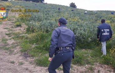 """Cosenza, denunciati 8 """"caporali"""" per impiego illegale di manodopera"""