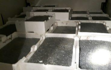 Roseto Capo Spulico, sequestrata una tonnellata di novellame di sarda