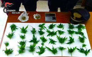 marijuana arresto
