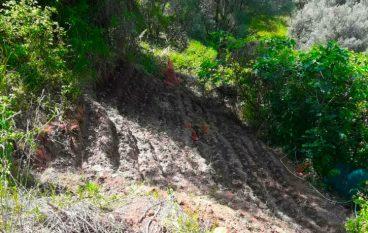 Castellace di Oppido Mamertina, rinvenuta piantagione di droga