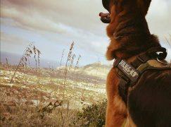 Importante riconoscimento per il cane Aslan