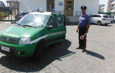 Sorbo San Basile, denunciate due persone e sequestrati formaggi