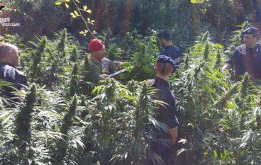 San Luca, trovate oltre 1000 piante di cannabis e 2 chili di stupefacente