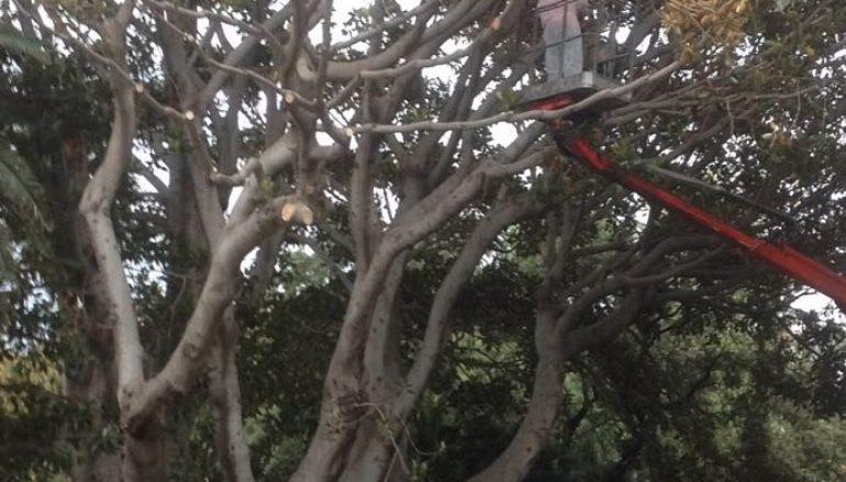 Reggio Calabria, procede operazione Ficus