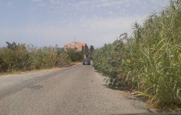"""Comitato """"Sant'Elia – Tegani"""": vegetazione occludente e rifiuti in Via Nazionale"""