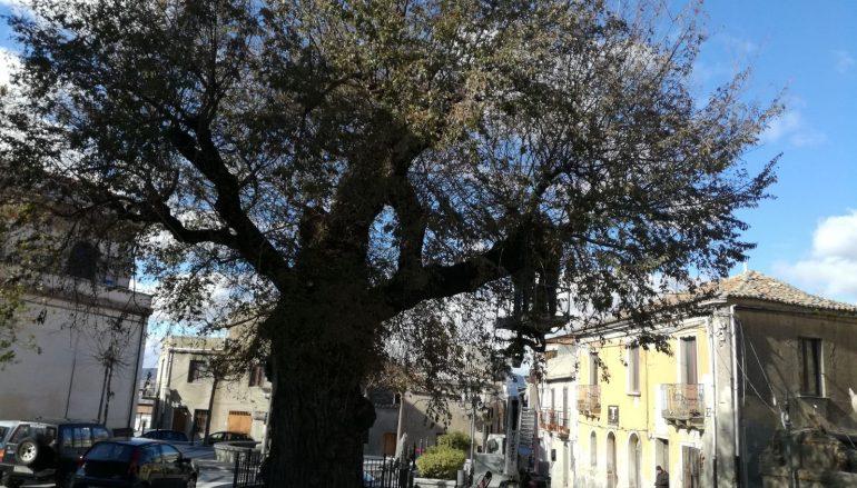 Olmo di San Lorenzo, analisi stato di salute